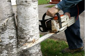 Long-Island-Tree-Service-Suffolk-County-NY